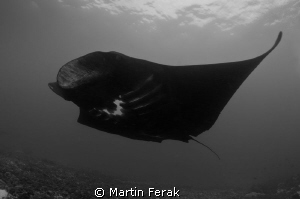 BW manta by Martin Ferak 
